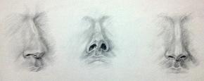 Nose Studies